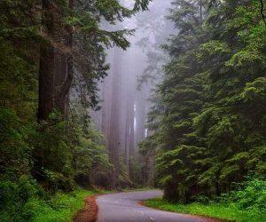 macam+macam+hutan