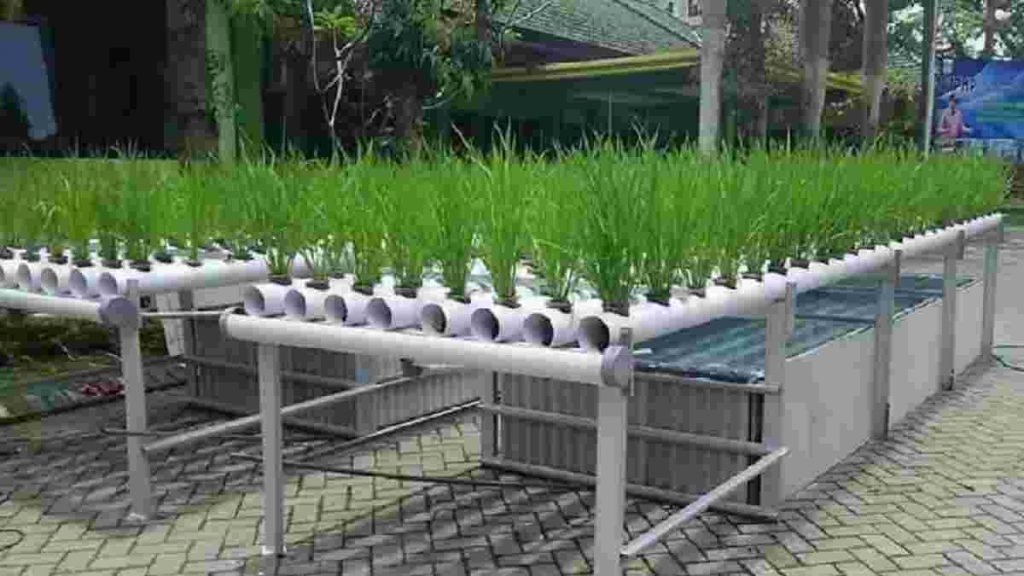 tanaman+hidroponik